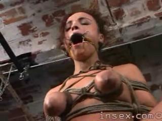 Insex - 108