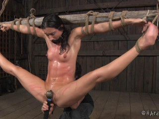 Barn Exercises , Bdsm Action
