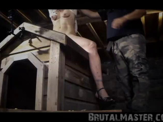 Pig - Bitch on a D0g House