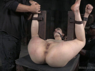 Bondage Monkey Part 3