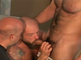 Bear Bust