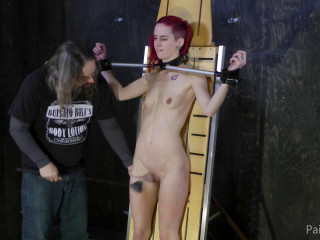Paintoy - Back for BDSM