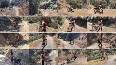 Rachel Greyhound - Pony Cart Walk