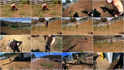 Rachel Greyhound - You Are The Fucking Pony