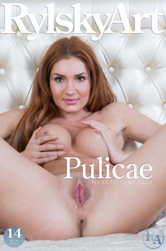 Pulicae