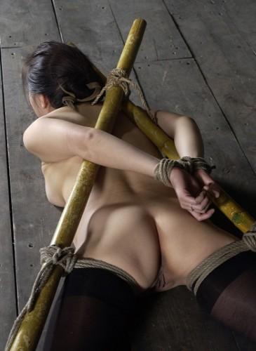 Bamboo - Koan