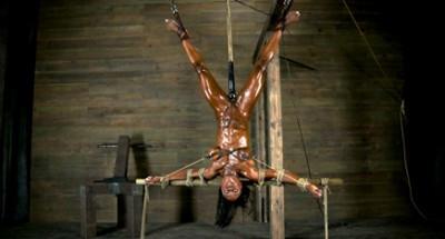 Description Professional Body Builder, bound, oiled