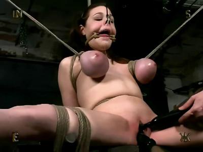Insex - Piglet's Training