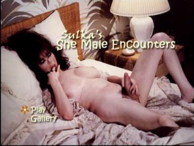 Sulka She Male Encounters