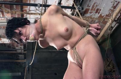 Insex - 322 Sage