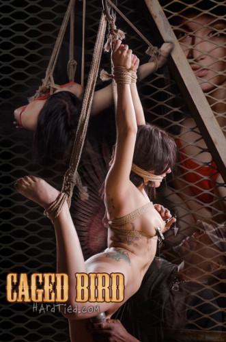 Hardtied – Apr 22, 2015 – Caged Bird – Gabriella Paltrova – Jack Hammer