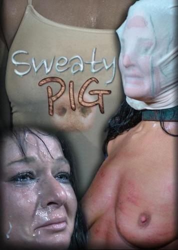 Sweaty Pig 1