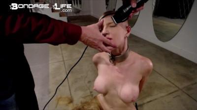 Bondagelife - Greyhound's Transition - Going Hairless