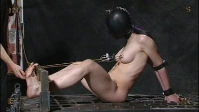Insex - 16x9 (731, Elizabeth, Moonshine)