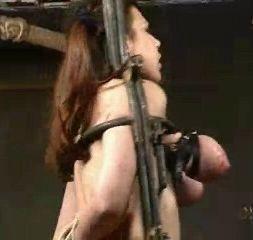 Rack – Live Feed – Piglet