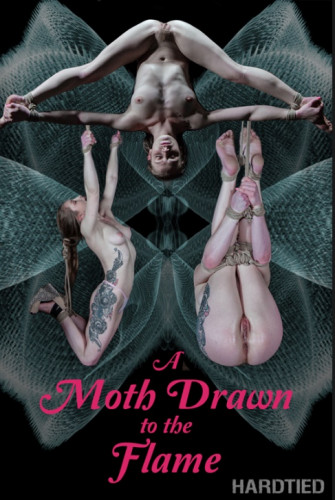 A Moth Drawn To The Flam - Cora Moth