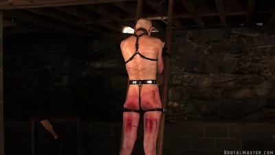 Brutal Master - Greyhound On The Ladder In The Dungeon