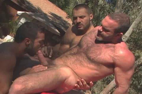 Best Bears Attack