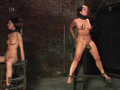 Insex - Model 33 Complete Pack (5 clips)