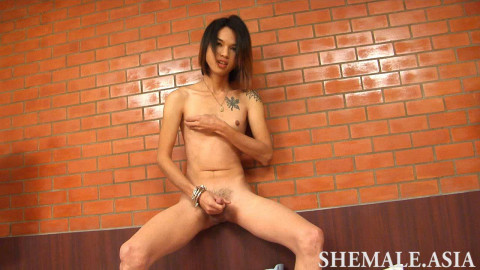 Shemale.asia