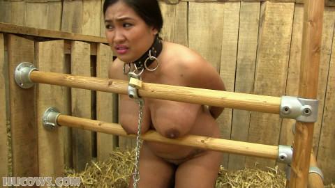 Mistress Amy captured (2016)