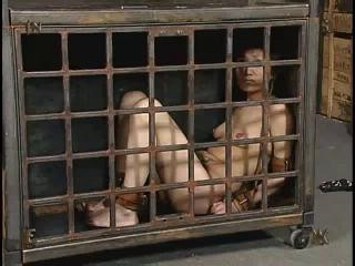 Insex - 731 (Live Feed From January 6, 2003) (731)