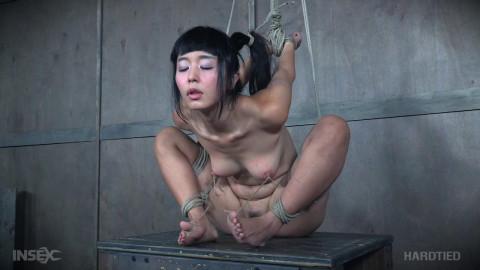 Marica Hase - Morph