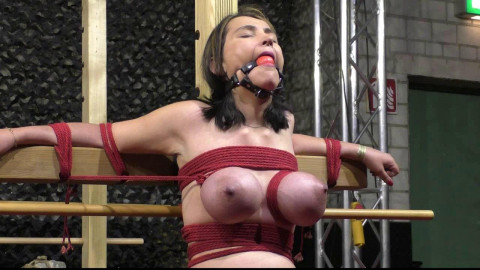Breastslave S. animal play Bound Con