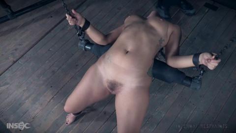Pussy on a Perch - Gabriella Paltrova