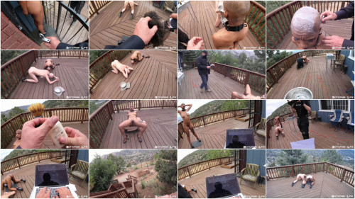 BDSM Shaveing And Staples Brutal Master Edition Rachel Greyhound
