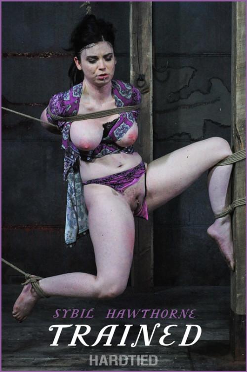 BDSM HdT  Sybil Hawthorne -  Trained (2020)