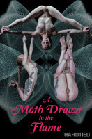 BDSM A Moth Drawn To The Flame - Cora Moth