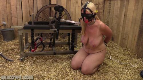 BDSM HuCow 54 – red cow milker