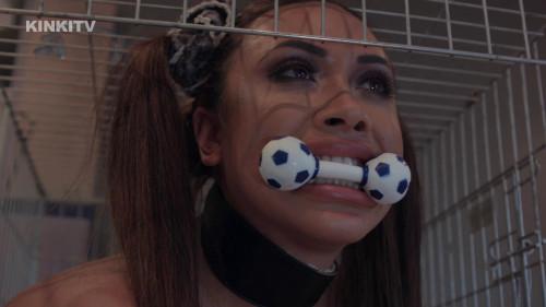 BDSM HD Bdsm Sex Videos Hannah Dog Cage Training