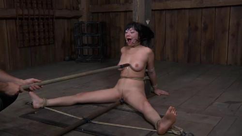 HD Bdsm Sex Videos Dragon