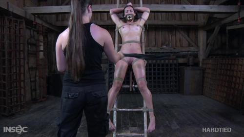 BDSM Escalated