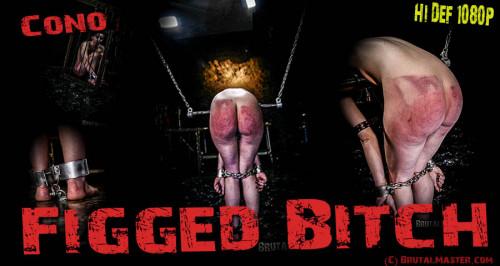 BDSM Cono - Figged Bitch
