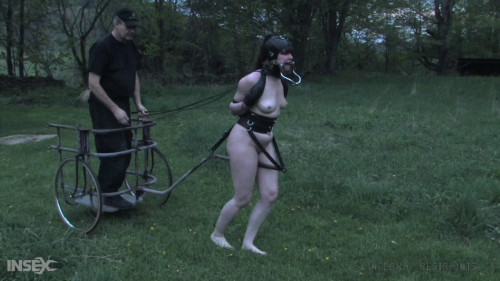 BDSM Harnessed like a horse