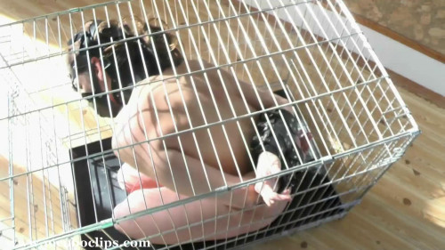 BDSM Caged Blowjob Slave Girl XXL