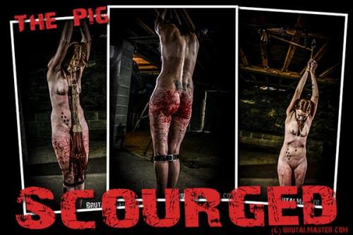 BDSM Pig - Scourged
