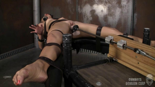 Sex Machines Primed (2013)