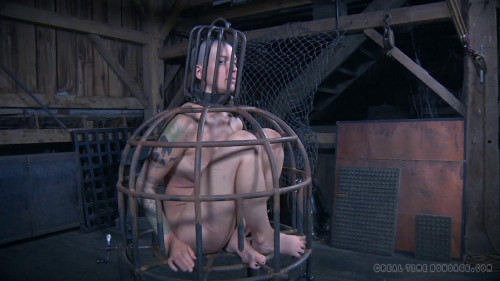 BDSM The Extended Feed of Abigail Dupree