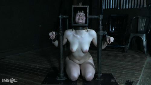 BDSM Progeny