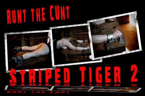 Runt  Tiger Stripes 2