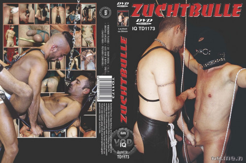 Zuchtbulle Gay BDSM