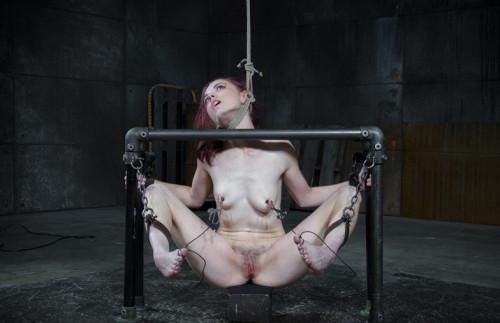 Sexy Ivy Addams-Pit Pull