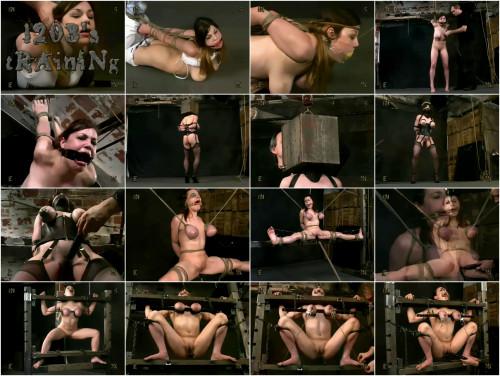 Insex Piglet - Piglet's Training