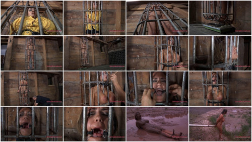 Caged Pig (Trina Michaels and Pd)