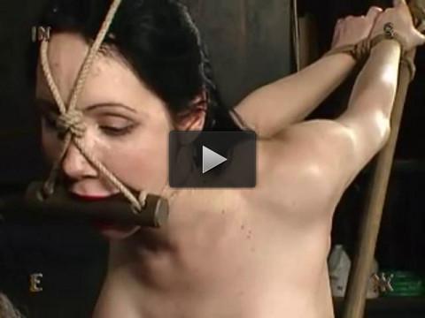 Insex — 418 (Geitia)